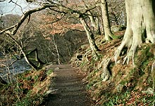 Photo of Dales Way: Track in woods above Strid